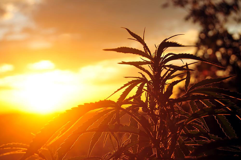 medical marijuana Orlando